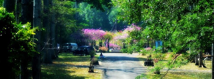 Wisata Kebun Raya Purwodadi Pasuruan Wiro Nyobamoto