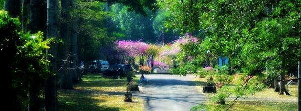Taman Bugenvil