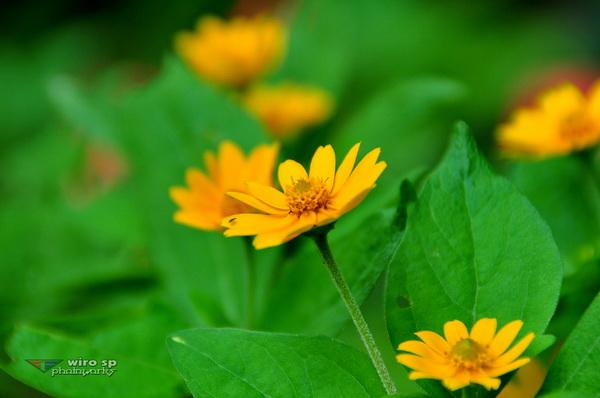 Bunga 03_Resize